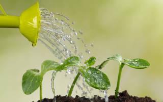 Какой водой лучше поливать комнатные растения