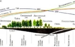 Схема посадки орехового сада