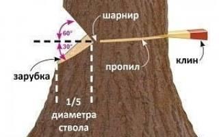 Как правильно повалить дерево в нужном направлении