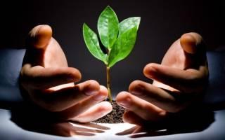 Ржавчина на комнатных растениях лечение