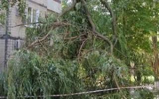 Как убрать дерево возле дома по закону