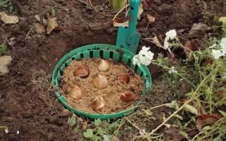 Приспособление для посадки тюльпанов