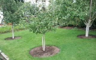 Правила посадки плодовых деревьев на участке