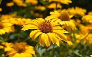 Желтые цветы значение дарить