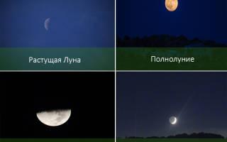 Время пересадки комнатных растений по лунному календарю