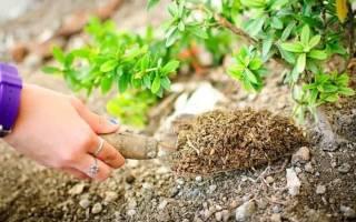 Чем можно заменить азотные удобрения
