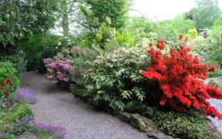 Теневыносливые декоративные кустарники для сада