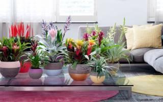 Полезные комнатные цветы в квартире