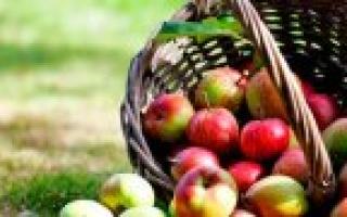 Приспособление для снятия яблок с дерева