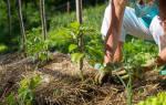 Что значит мульчировать почву