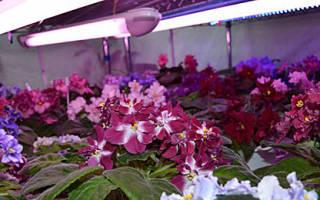 Подсветка комнатных растений в домашних условиях