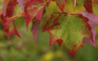 Причины листопада осенью