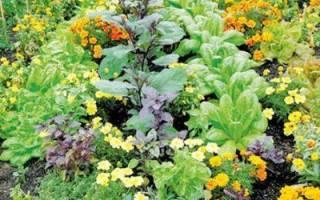 Совместимость овощных культур на огороде таблица