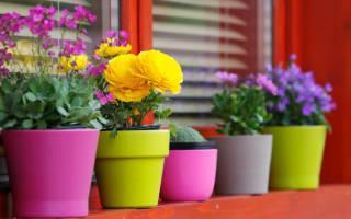 Неприхотливые комнатные растения цветущие круглый год
