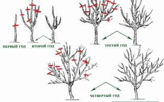 Как правильно обрезать молодые фруктовые деревья