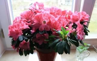 Комнатные цветы неприхотливые в уходе цветущие
