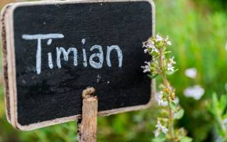 Тимьян и чабрец в чем разница