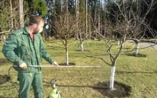 Чем обрабатывать деревья осенью когда опадут листья