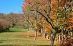 Уход за старыми яблонями осенью