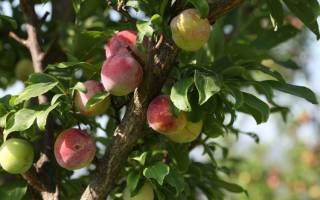 Болезни садовых деревьев и их лечение