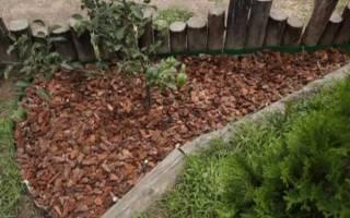 Как избавиться от крапивы на даче навсегда