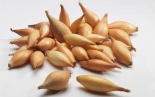 Как хранить лук севок до посадки