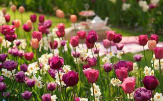 Когда сажать тюльпаны и нарциссы осенью