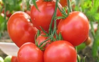 Супердетерминантные сорта томатов для открытого грунта