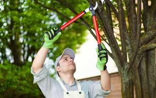 Санитарная обрезка деревьев нормы