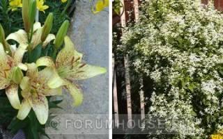 Ароматные растения для сада многолетние