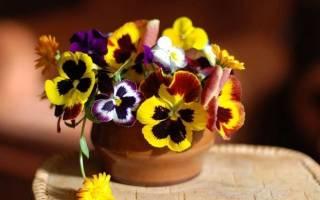 Виола цветы выращивание из семян