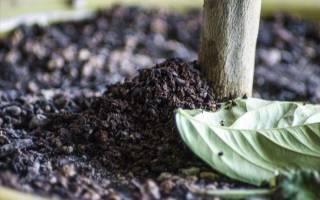 Использование кофейной гущи в качестве удобрения