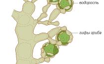 Лишайники крепятся к грунту с помощью