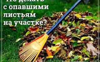 Что делать с листвой на даче