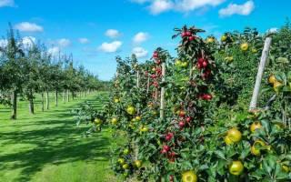 Когда опрыскивать железным купоросом плодовые деревья