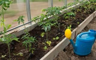 Капельный полив для томатов в теплице