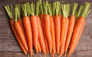 Подготовка почвы под морковь осенью