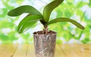 Что делать чтобы орхидея снова зацвела
