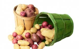 Обработка картофеля перед посадкой медным купоросом