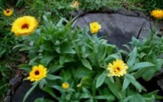 Цветы для тенистых участков которые долго цветут