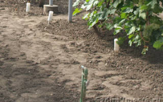 Влагозарядный полив винограда осенью