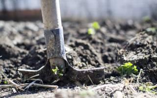 Нужно ли обкапывать плодовые деревья осенью
