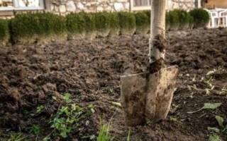 Надо ли перекапывать землю осенью