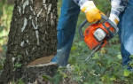 Можно ли рубить сухие деревья в лесу