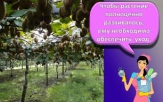 Папоротники в саду выращивание