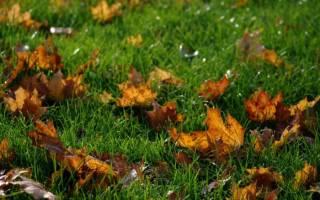 Посев газона осенью сроки