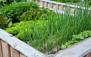 Зелень на огороде список