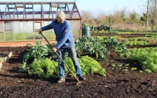 Как подготовить грядки осенью к посадке весной