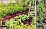 Как улучшить песчаную почву на огороде