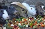 Что едят нутрии в домашних условиях